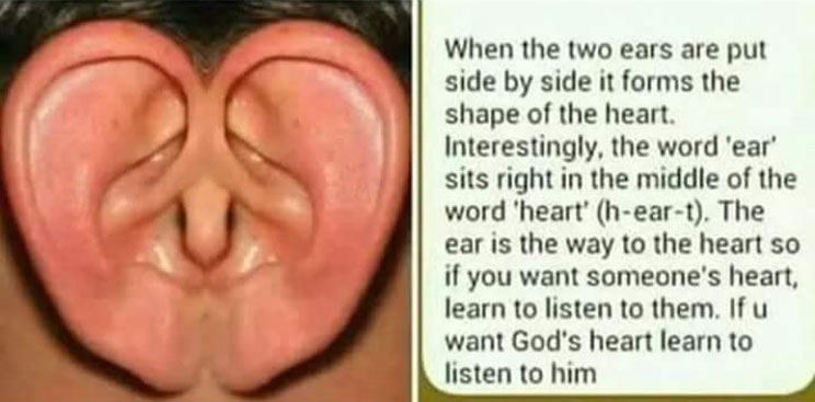 Ears: The extension of the heart